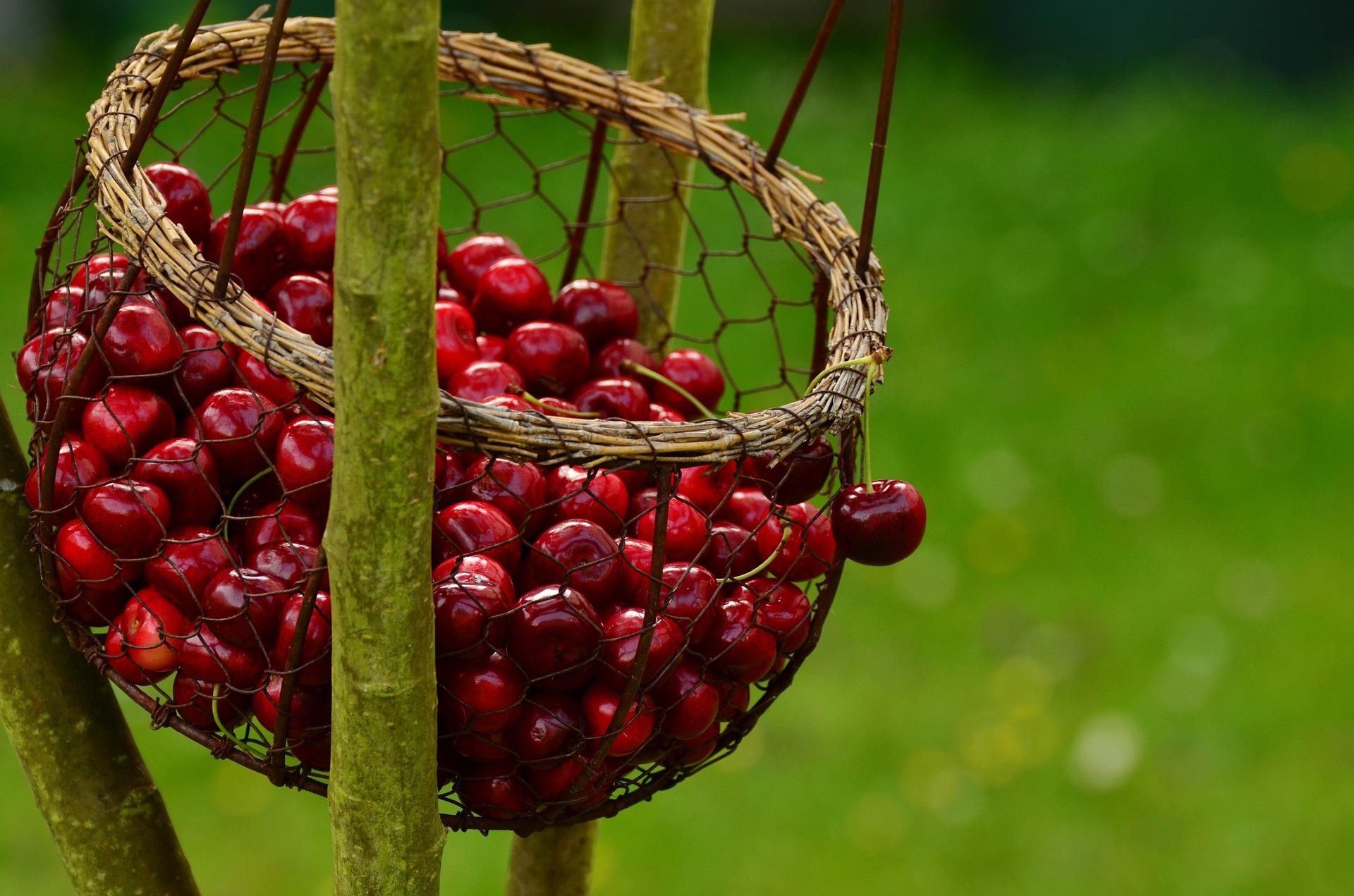 cherries-1503974_1920